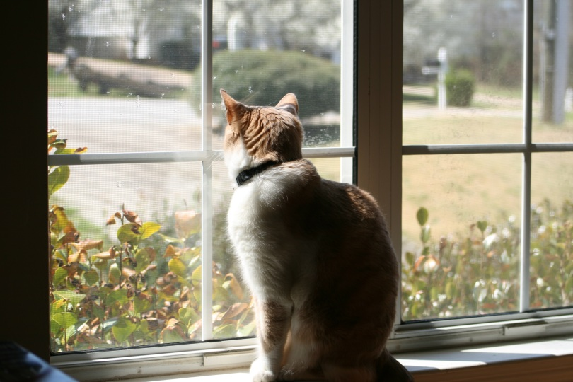 _absolutely_free_photos_original_photos_cat-see-the-window-3888x2592_81008